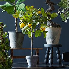 Topiaries & Plants